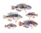 Coastal Decor Collage Giclee Art Print - Fish of the Sea