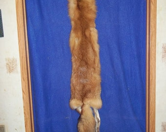 Red Fox tanned fur pelt real animal skin hide part taxidermy