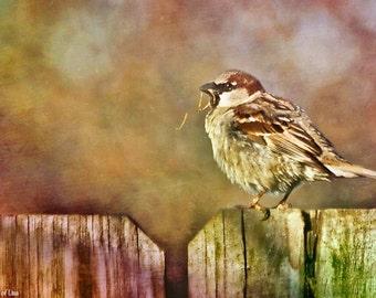 Nesting Bird, Fine Art Photo, Birdlife, signed by me