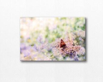 butterfly photography canvas wrap floral canvas art 12x12 24x36 fine art photography canvas print pastel decor canvas wrap large nature art