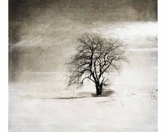 Black and White Winter Tree - Fine Art Photo - Landscape - Square - For Him, For Her