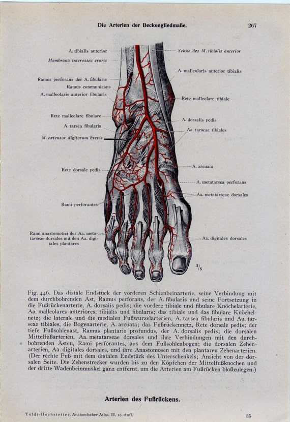 items similar to vintage medical page anatomical diagram foot feet toes arteries great for. Black Bedroom Furniture Sets. Home Design Ideas