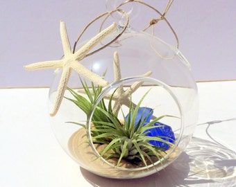 Air Plant Wedding Favor Beach Wedding Glass Orb with Sand Cobalt Sea Glass Twine and 2 white starfish