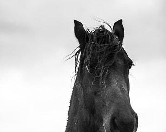Horse photography, black stallion portrait. Friesian horse art horse head print. Large horse art man cave, mancave wall decor Boyfriend gift