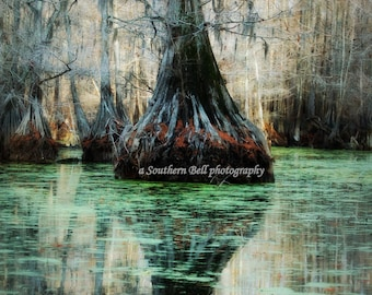 Large Tree Mysterious Lake House Office Pictures Swamp Bayou pics Green Trees Moss on Water 8x10 Louisiana Bayous. Cabin Photos 22
