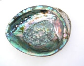 Natural Abalone Shell (Large 7 1/2 x 6)