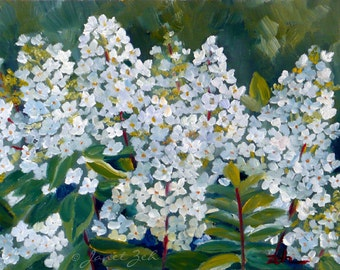 Hydrangeas Print White Flowers Wall Art by Janet Zeh