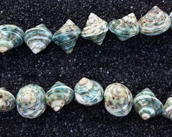Sea Shell Beads (Green jade turbo base)