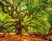 South Carolina Photography, nature photography, angel oak tree, room decor,  wall art