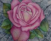 Queen Elizabeth Pink Rose Original Watercolour Painting