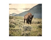 Bison Photo, Yellowstone National Park, Animal Photography, Buffalo Photo, Gift for Him, Office Decor, Wildlife, Americana