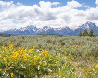 Mountain Landscape Photography, Willow Flats Wyoming, wildflower meadow Grand Tetons photo