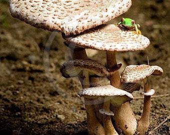 Mushroom and Frog Wall Art Print