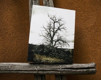 Tree Photograph, Wood Photo Block, Mounted Photograph, Ready to Hang, Black and White