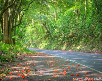 Road to Hana Photograph - Hawaii Print - Maui Photo - Tropical Art, Hana Highway, Colorful Flowers