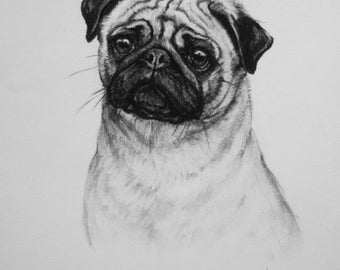 Pug dog fine art Limited Edition print from an original charcoal drawing