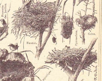 Antique French Print Dictionary Page 1920s Illustrations Bird nests paper projects scrapbooking, collageBook page