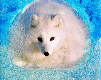 Array collage 12 x 12 cm Snow Fox.