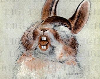 My What Big Teeth You Have, Mr. Bunny!  Storybook Rabbit Vintage Illustration. Adorable Bunny Vintage Digital Download. Digital Rabbit PRINT