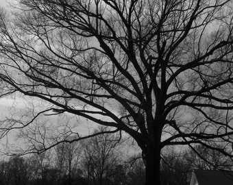 Tree and Sky, Black and White Photography, Fine Art Photography