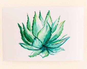 Any 1 Succulent Print, Horizontal