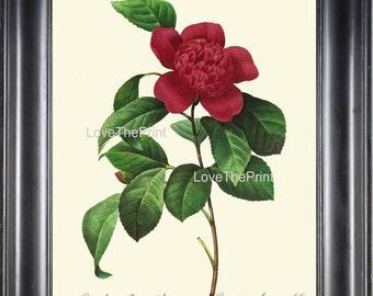 BOTANICAL PRINT Redoute Flower 8x10 Botanical Art Print 31 Beautiful Red Camellia Anemone Plant Garden Nature to Frame Home Decor