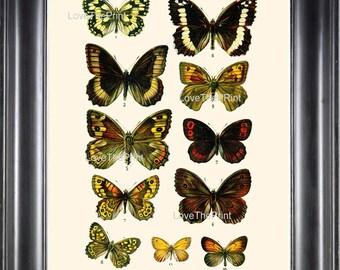 EUROPEAN BUTTERFLY PRINT  Botanical Art Print 5 Beautiful Butterflies Spring Summer Flower Garden to Frame Interior Design Home Decor