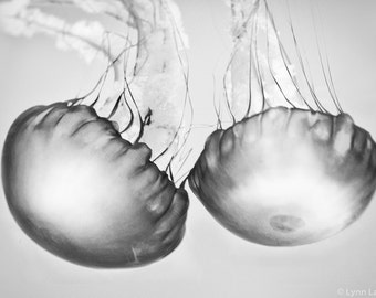 "Black and White Photography - jellyfish photograph, black and white jellyfish, ocean, sea, beach home decor, jellyfish prints - ""Soul Mates"""