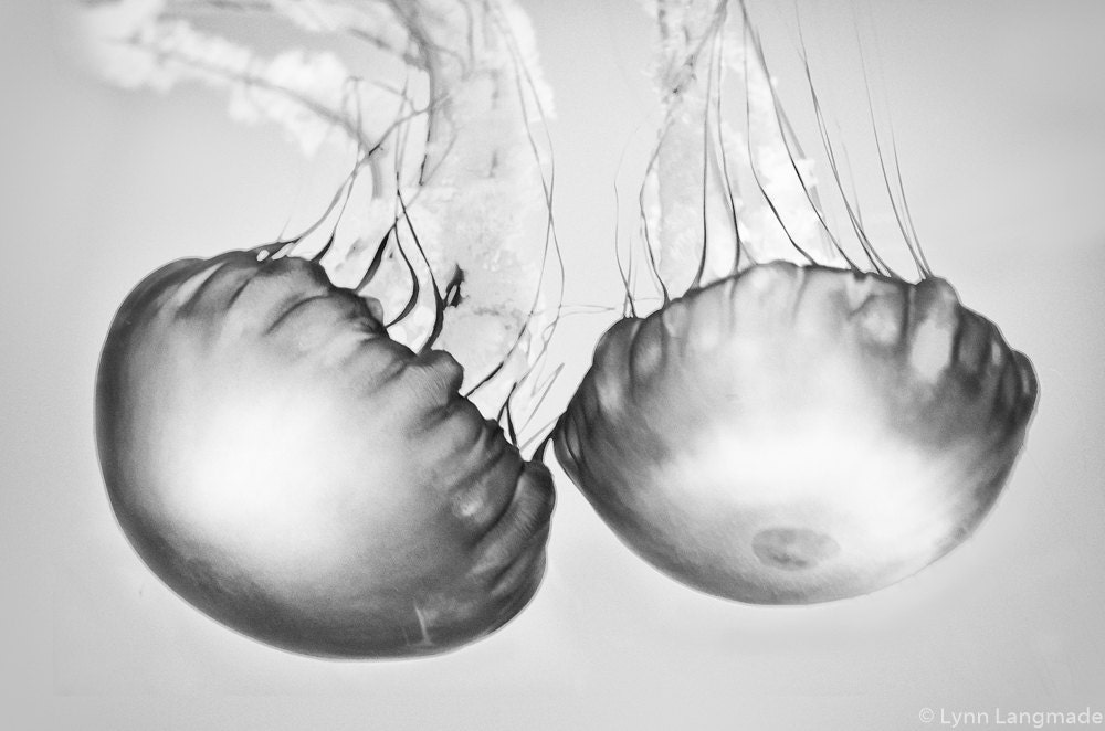 Jellyfish Photography Black And White Black And White Photography