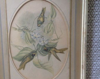 Vintage Framed John Gould Hummingbird Print-Mid 1800's- Small Size-Ivory Frame Oval Mat