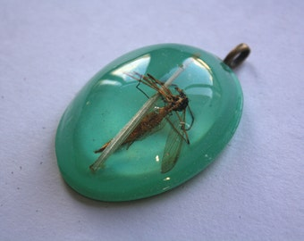 Daddy long legs on grass necklace
