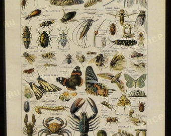 Print - Arthropods - French Illustration - 1949