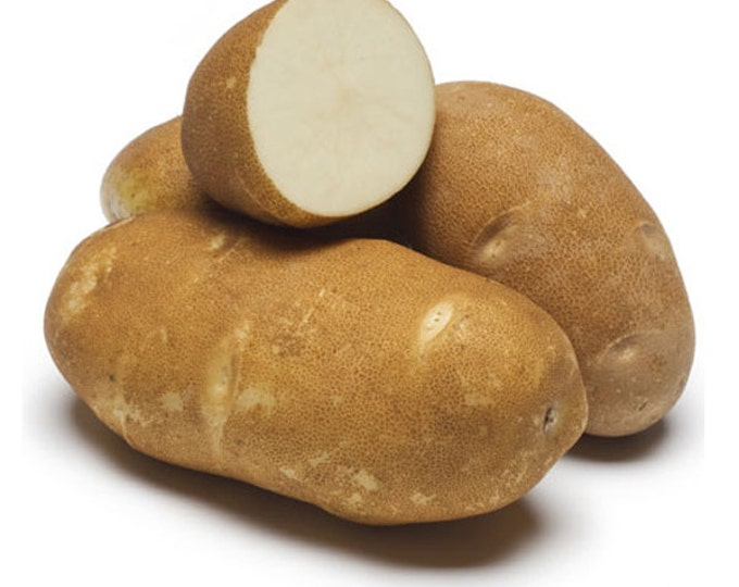 Russet Potato | Burbank Russet Seed Potatoes Certified Organic and Virus Free 5 Lbs. Spring Shipping Non-GMO
