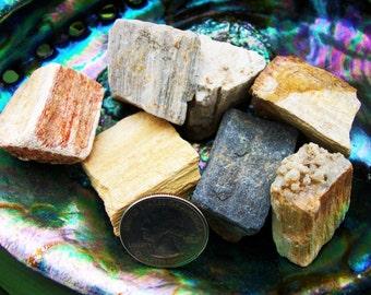 Petrified Wood ~ 1 medium Reiki infused rough stone from Brazil