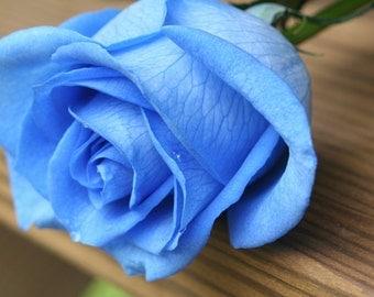 Blue rose seeds,202, flower seeds, roses seeds, heirloom seeds, gardening