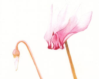 Watercolor Cards Pink Cyclamen, 4 Flower Cards Watercolour Cards,  GreetingCards Nature Cards Blank Notecard Set