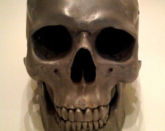 Human Skull Cold-Cast 1/1 Lifesize