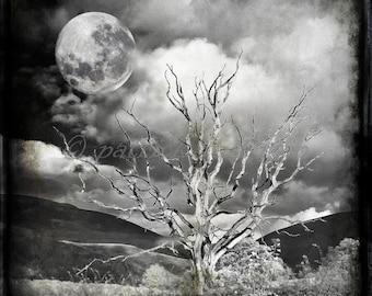 annies tree (monochrome lunar)  12 x 12 limited edition Glicee print
