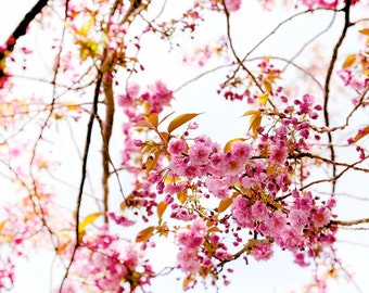 Nature photography, Cherry Blossom, Spring,Trees, Branches, Pink, Wall Decor