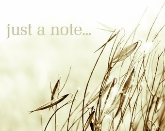note cards, artisan note cards, tall grass, seeds, pale amber, sepia, fine art photography