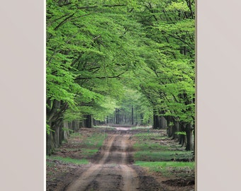 Tree Lined Dirt Road Photography Woodland Nature Photoraph Rustic Path Wall Art Country Landscape Winding Shady Lane Forest Grove Home Decor