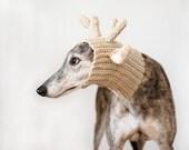 Greyhound Picture, Dog Photograph, Greyhound Photograph, Brindle Greyhound, Greyhound Gift, Greyhound Rescue