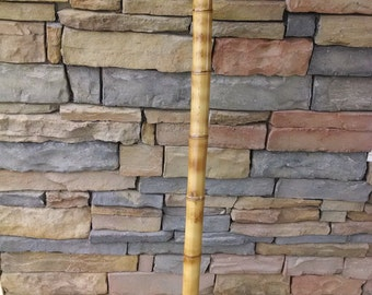 Hiking Stick-Rustic Root End Cut Bamboo Hiking Staff