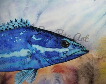 Limited Edition Sapphire Blue Grouper Watercolor Fish Art Painting Museum Quality Giclee by Chris Turnier