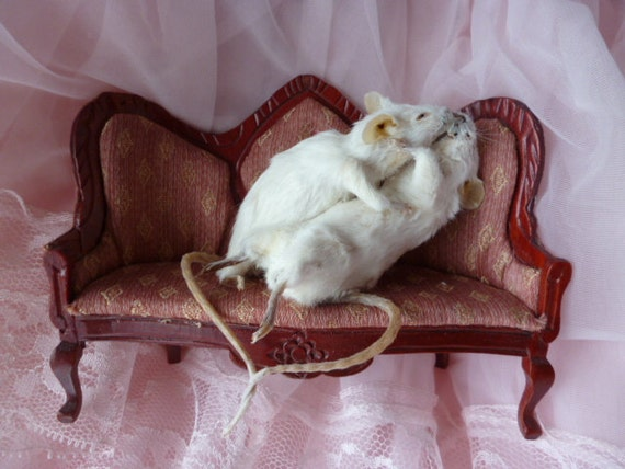 romantic taxidermy mice making out on the couch kissing and hugging CUTE