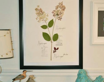 Herbarium framed dried natural flowers
