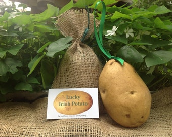 Irish ornament, looks like a real potato. Very cute!