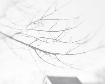 Bare Winter Tree Branches Black and White Photo Print { sky, lensbaby, hazy, sunlight, wall art, macro, nature & fine art photography }