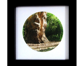 Forest Tree in Summer Photographic Art Print.  Colour and Black & White.