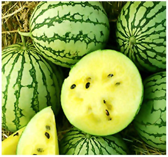 PETITE YELLOW WATERMELON Seeds For Home and Farm Markets